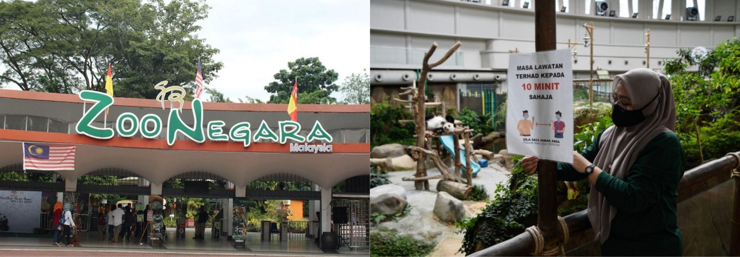Zoo Negara Reopens Their Doors To Visitors!