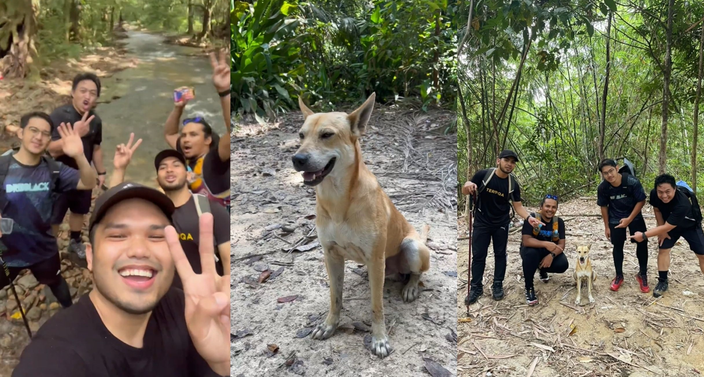 """""""Pali"""" The Trail Dog Goes Viral On Social Media"""