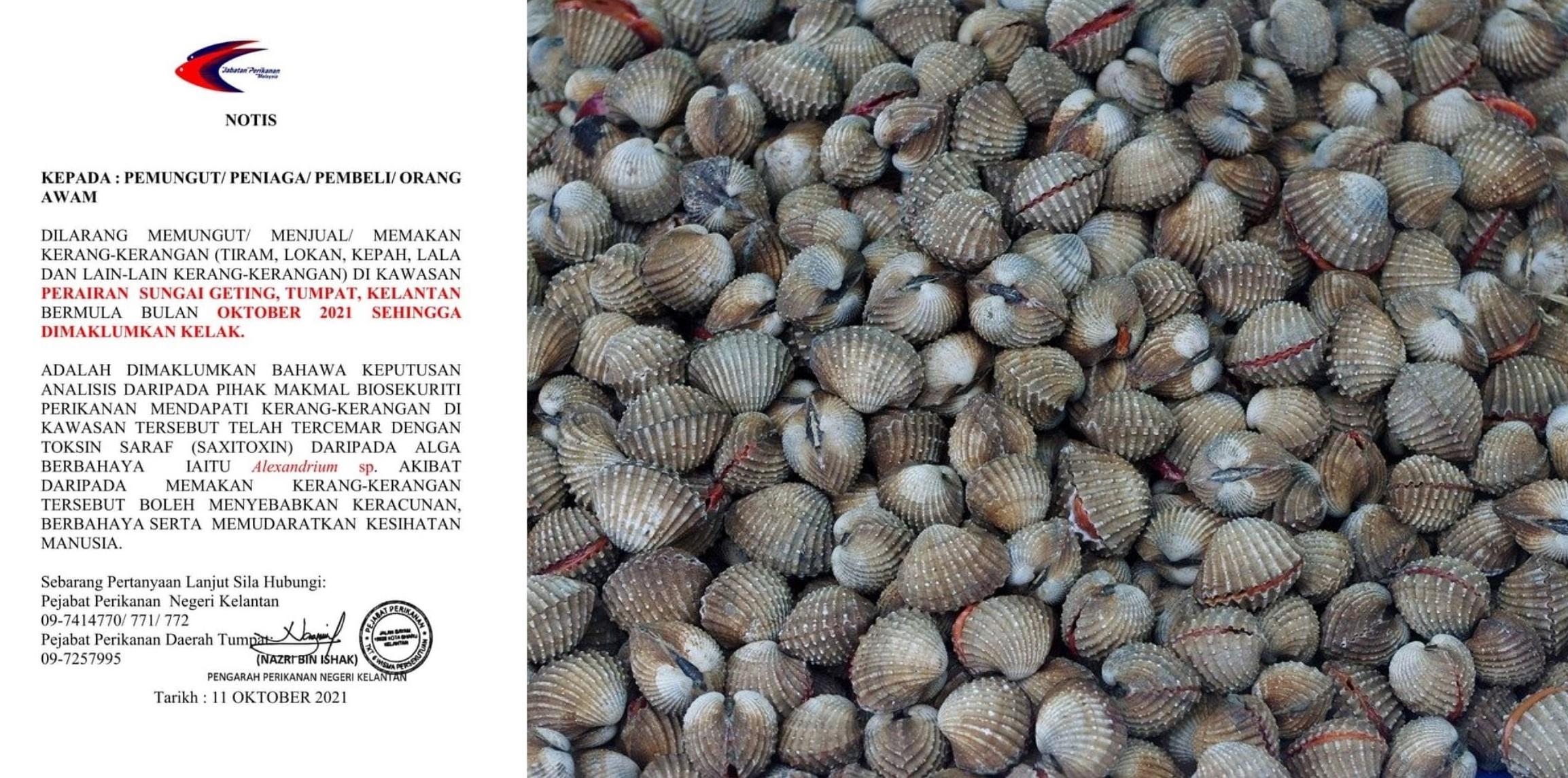 Shellfish Lovers Beware! Do Not Consume Shellfish From Kelantan As It Is Toxic!